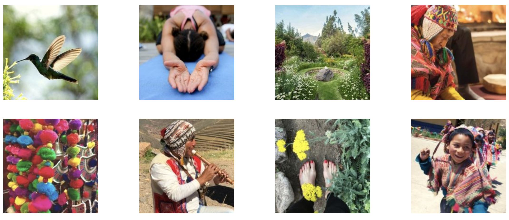 Peru shaman healing flowers yoga retreat