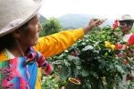 organic delicious Peruvian meals